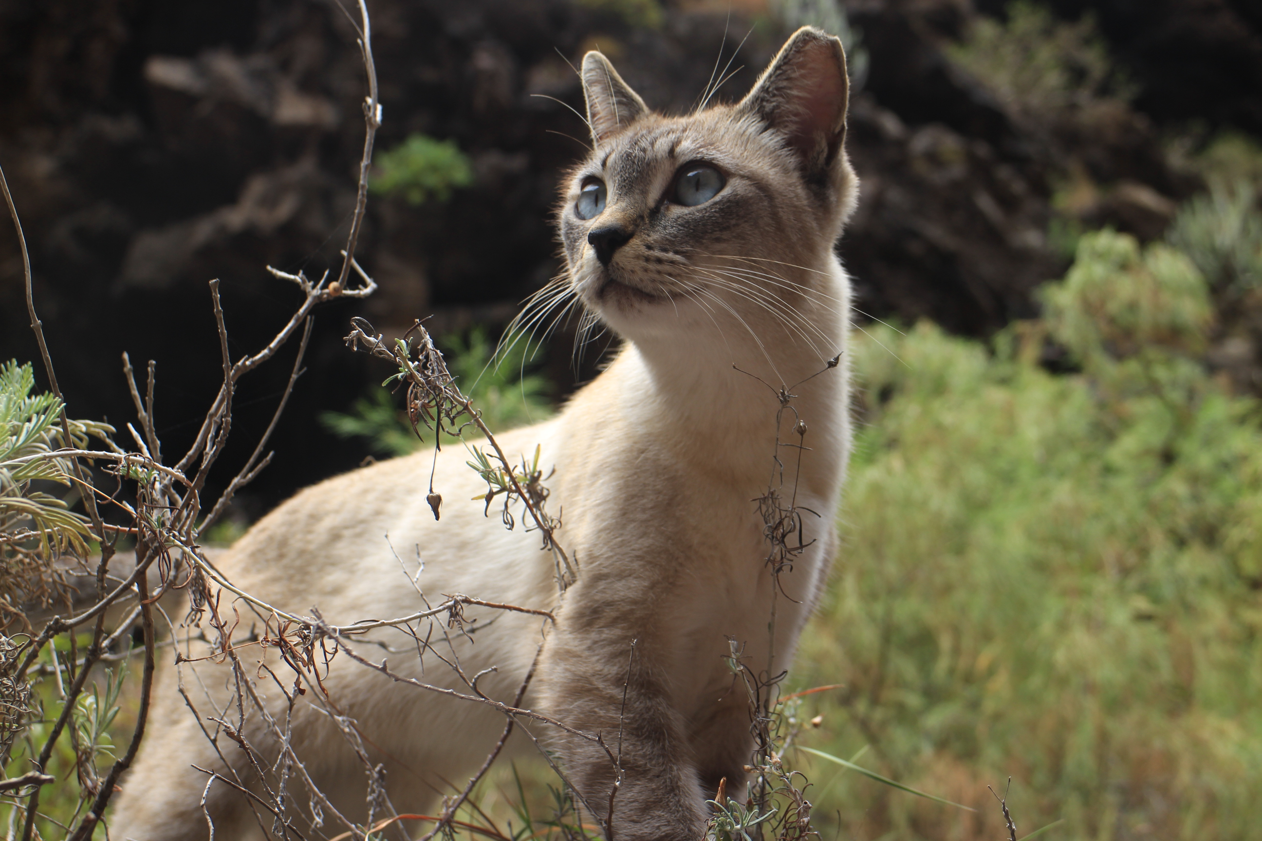 在步道上遇見的野貓